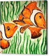 Clowning Fish Acrylic Print