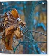Clump Of Fall - Early Winter Acrylic Print