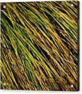 Clump Of Grass Texture Acrylic Print