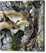 Cluster Of Fungi Acrylic Print