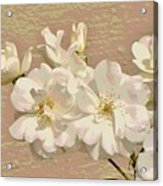 Cluster Of White Roses Posterized Acrylic Print