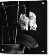 Clustered In A Corner Acrylic Print