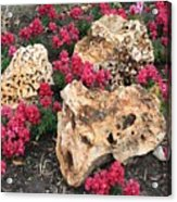 Clusters Acrylic Print
