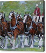 Clydesdale Hitch Acrylic Print by Anda Kett