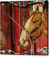 Clydesdale Ripped Acrylic Print