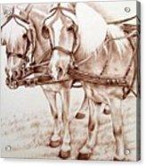 Coach Horses Acrylic Print