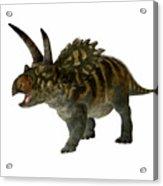 Coahuilaceratops Profile Acrylic Print