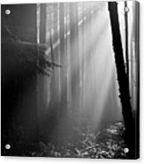 Coastal Forest 2 Acrylic Print