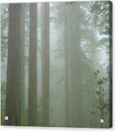 Coastal Mist Acrylic Print