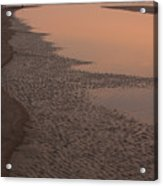 Coastal Strand At Dawn On Hunting Island Acrylic Print