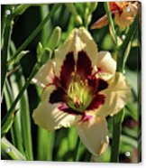 coat and tie Daylily Acrylic Print