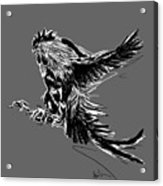 Cock Bw II Transparant Acrylic Print