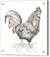 Cock Of The Walk Acrylic Print