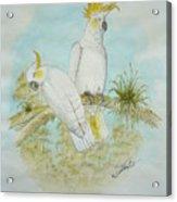 Cockatoos Acrylic Print