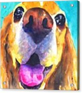 Cocker Spaniel Dog Smile Acrylic Print