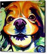 Cocker Spaniel - Cheese Acrylic Print by Alicia VanNoy Call