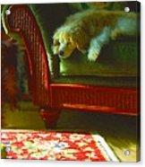 Cocker Spaniel Dog ... Montana Art Photo Acrylic Print