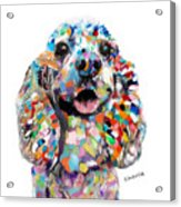 Cocker Spaniel Head Acrylic Print
