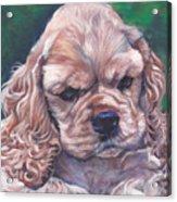 Cocker Spaniel Puppy Acrylic Print by Lee Ann Shepard