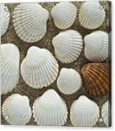 Cockles Collection Acrylic Print