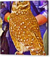 Coco The Burrowing Owl In Living Desert Zoo And Gardens In Palm Desert-california Acrylic Print