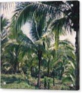 Coconut Farm Acrylic Print