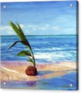 Coconut on beach Acrylic Print