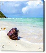 Coconut On The Beach Acrylic Print
