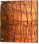 Coconut Palm Acrylic Print
