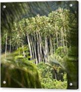 Coconut Palm Trees Acrylic Print