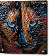 Coconut The Feral Cat Acrylic Print