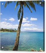 Coconut Tree Acrylic Print
