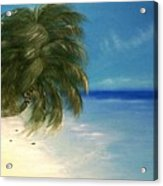 Coconuts And Palm Trees Acrylic Print