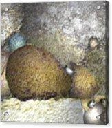 Cocoons Acrylic Print