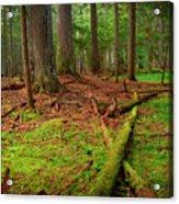 Coeur D'alene Forest Acrylic Print