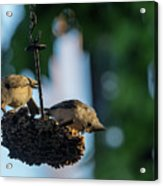 Coffee With The Birds Acrylic Print