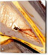Coffin Bone Plastination With Vascularisation Anatomical Details Acrylic Print