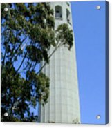 Coit Tower Acrylic Print