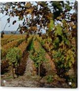 Colchagua Valley Vineyard Acrylic Print