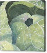 Cold Crop Acrylic Print