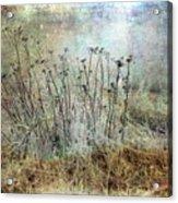 Cold Flowers Acrylic Print