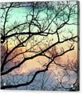 Cold Hearted Bliss Acrylic Print