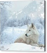 Cold Longings Acrylic Print