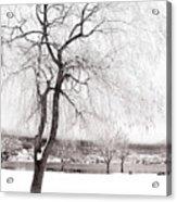 Coldness Acrylic Print