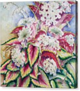 Coleus And Queen Anne Acrylic Print