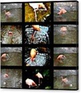 Birds' Collage-3 Acrylic Print