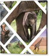 Collage Of Animals From Tanzania Acrylic Print