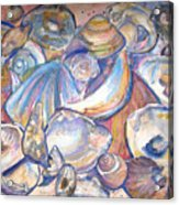 Collage Of Shells Acrylic Print