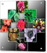 Collage Of Spring Flowers Acrylic Print