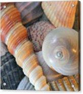 Collecting Shells Acrylic Print